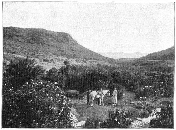 L'Oued Hadedj, d'aspect si charmant, est un bourbier qui sue la fièvre