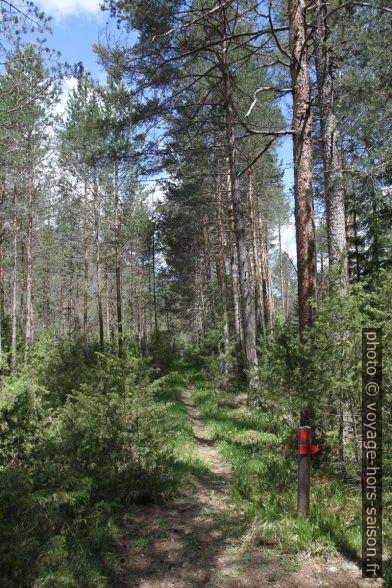 Chemin balisée dans la forêt de Martinauer Au. Photo © Alex Medwedeff