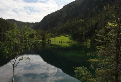 Prés au bord du lac Fernsteinsee. Photo © Alex Medwedeff