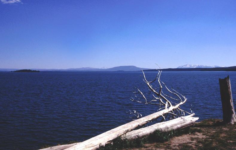 Bois mort au bord du Yellowstone Lake. Photo © André M. Winter
