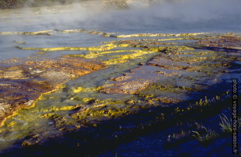 Algues brunes et verts dans le Midway Geysir Basin. Photo © André M. Winter