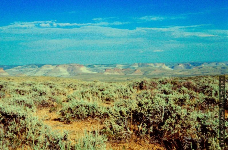 Sagebrush dans le Green River Basin. Photo © André M. Winter