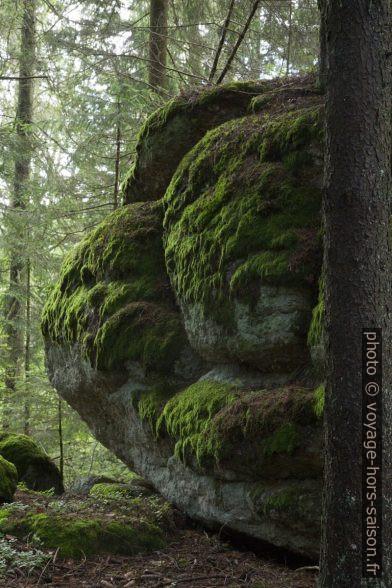 Grand rocher dans la forêt d'Altmelon. Photo © Alex Medwedeff