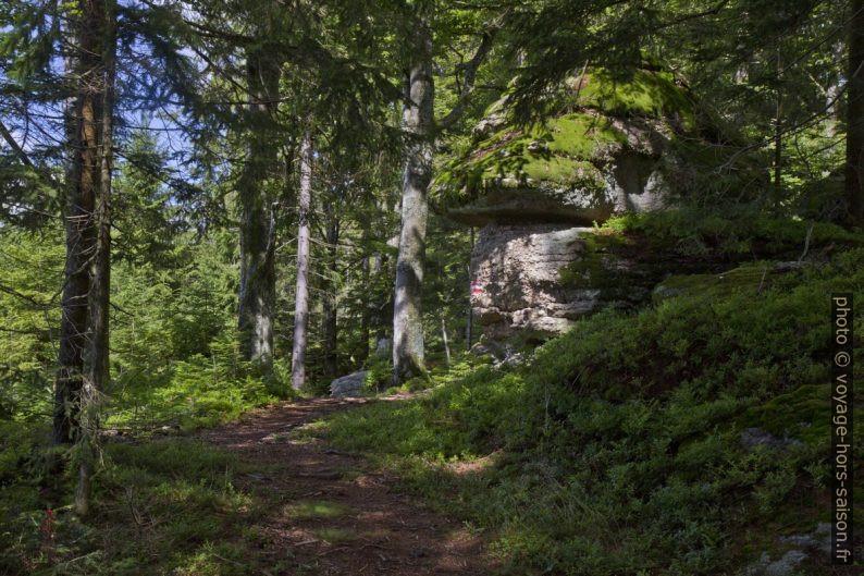 Rochers en forêt près d'Altmelon. Photo © Alex Medwedeff