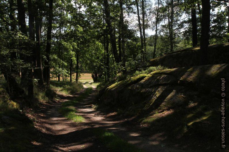 Piste forestière dans la lande près de Gmünd. Photo © Alex Medwedeff