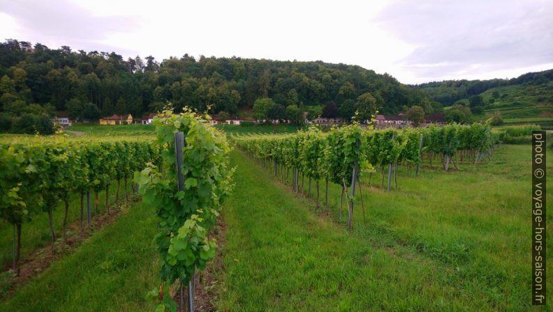 Eichberger Kellergasse et les champs de vignes. Photo © André M. Winter