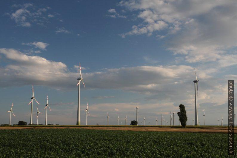Éoliennes dans la plaine autour de Petronell. Photo © Alex Medwedeff