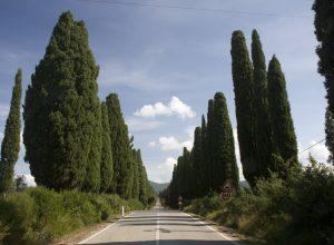 Viale dei Cipressi a Bolgheri. Photo © Alex Medwedeff