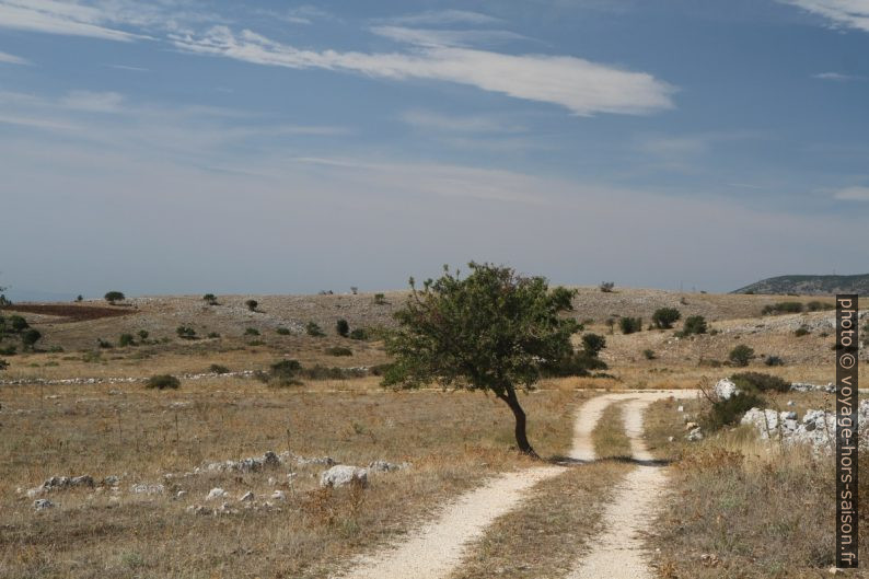 Chemin sur le plateau du Massif de Gargano. Photo © Alex Medwedeff