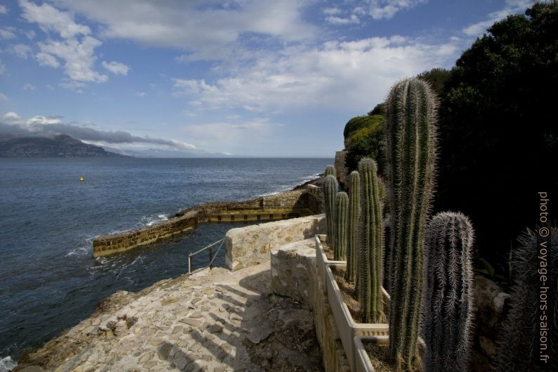 Rangée de cactées sur le sentier du littoral au nord de la Presqu'île du Cap Ferrat. Photo © André M. Winter