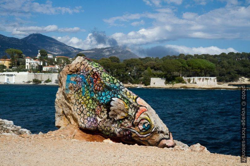 Graffiti de poisson sur un rocher de la même forme. Photo © Alex Medwedeff