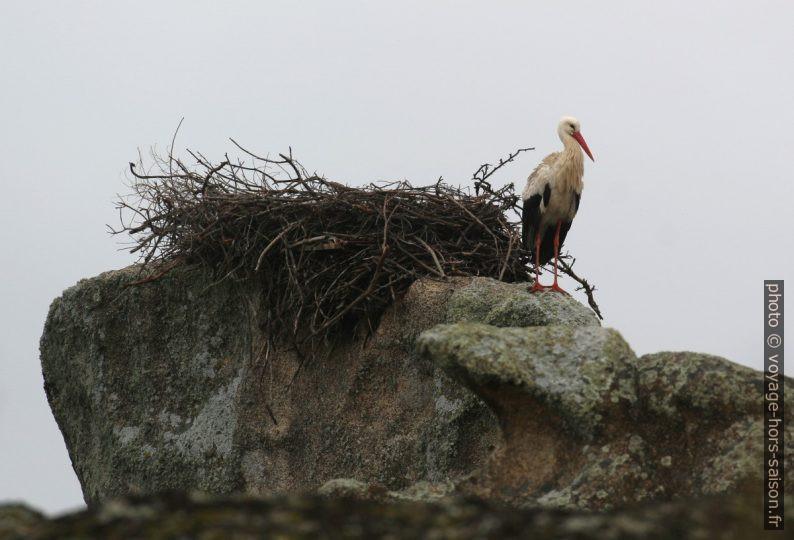 Cigogne attendant devant son nid dans les Barruecos. Photo © André M. Winter