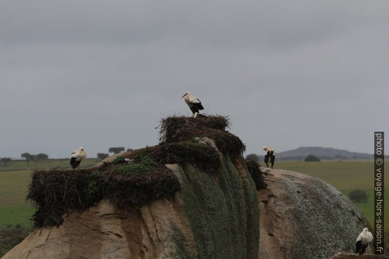 Cigognes et leurs nids dans les Barruecos. Photo © André M. Winter