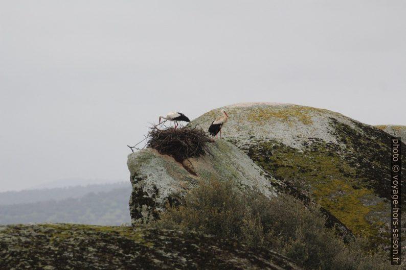 Cigognes à leur nid dans les Barruecos. Photo © André M. Winter