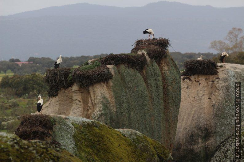 Plusieurs nids sur des rochers granitiques des Barruecos. Photo © André M. Winter
