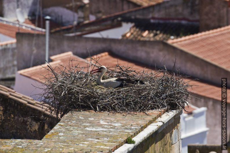 Nid avec cigogne sur un clocher. Photo © André M. Winter