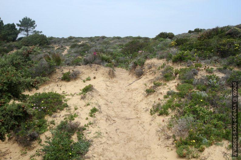 La Presqu'île du Ribat da Arrifana couverte de sable. Photo © Alex Medwedeff