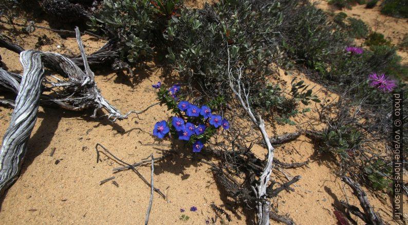 Petites fleurs bleues et bois mort. Photo © André M. Winter