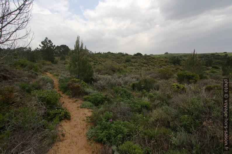 Chemin au sud de l'Urbanização Vale da Telh. Photo © André M. Winter