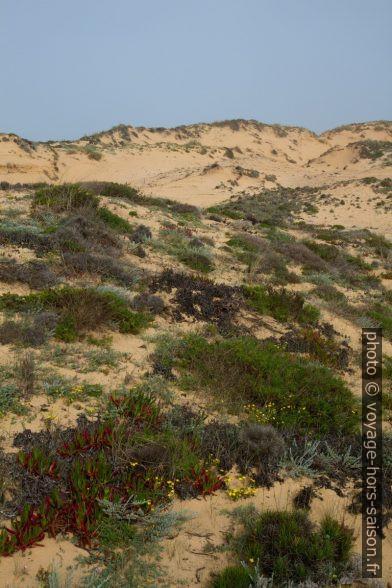 Dune d'Almograve couverte de végétation. Photo © Alex Medwedeff