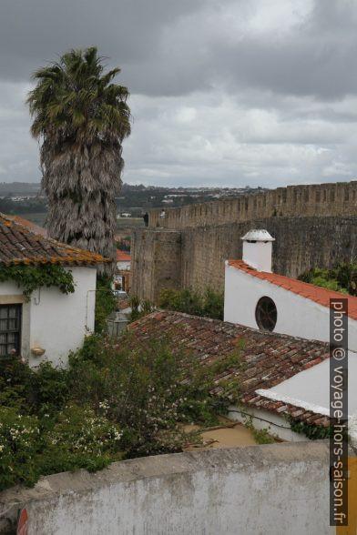 Palmier et muraille médiévale de Óbidos. Photo © Alex Medwedeff