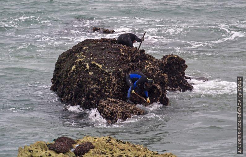 Ramasseurs de pédonculés sur un rocher par mer basse. Photo © André M. Winter