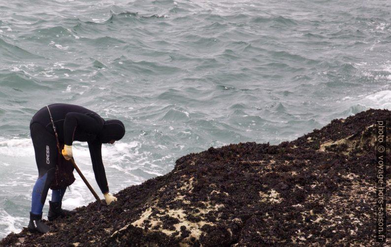 Un ramasseurs de pédonculés par mer basse. Photo © André M. Winter