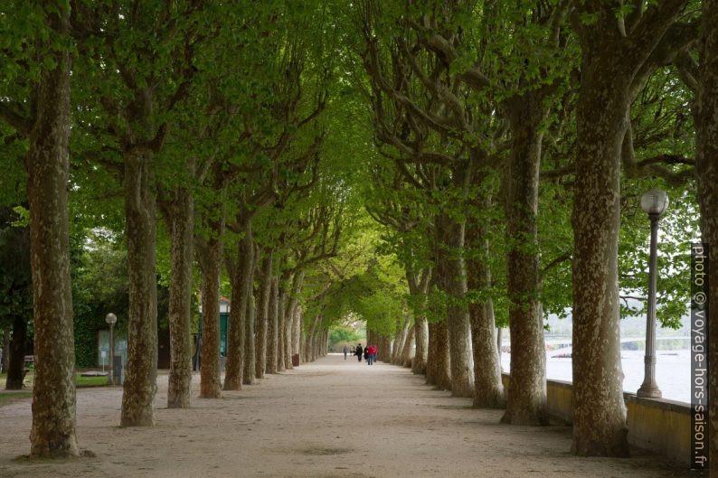 Allée de platanes dans le Parque Doutor Manuel Braga. Photo © André M. Winter