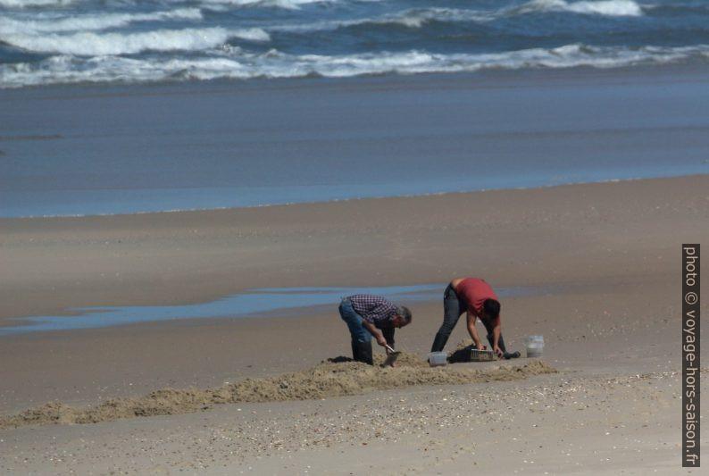 Chercheurs d'appâts à la plage par mer basse. Photo © André M. Winter