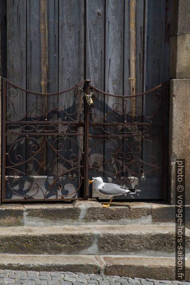 Goéland devant une porte de maison abandonnée. Photo © Alex Medwedeff