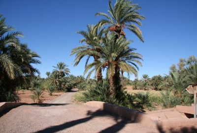 Circuit touristique dans l'Oasis du Drâa. Photo © André M. Winter