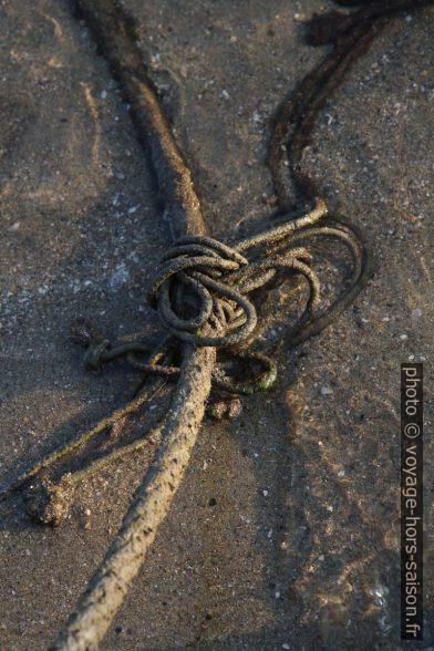 Amarre et cordes dans le sable. Photo © Alex Medwedeff