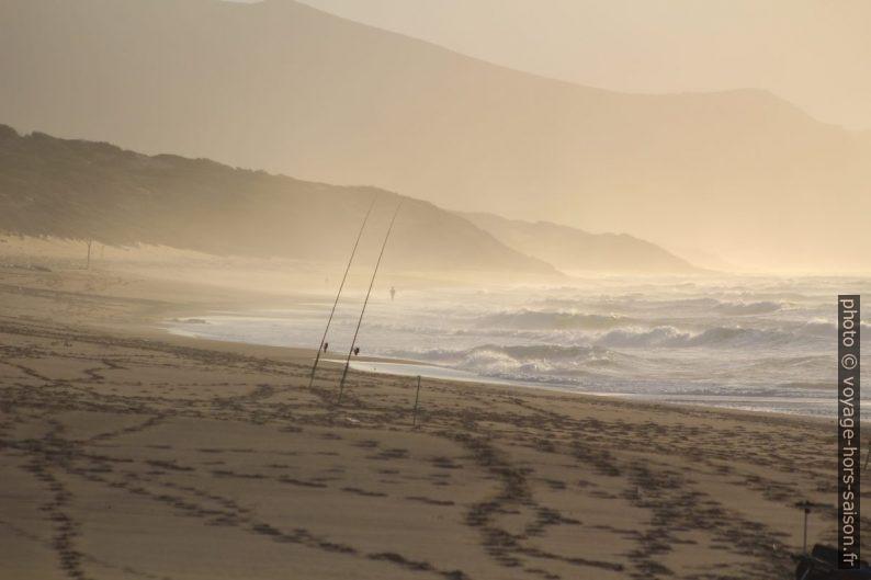 Cannes à pêche sur la plage de Piscinas. Photo © André M. Winter