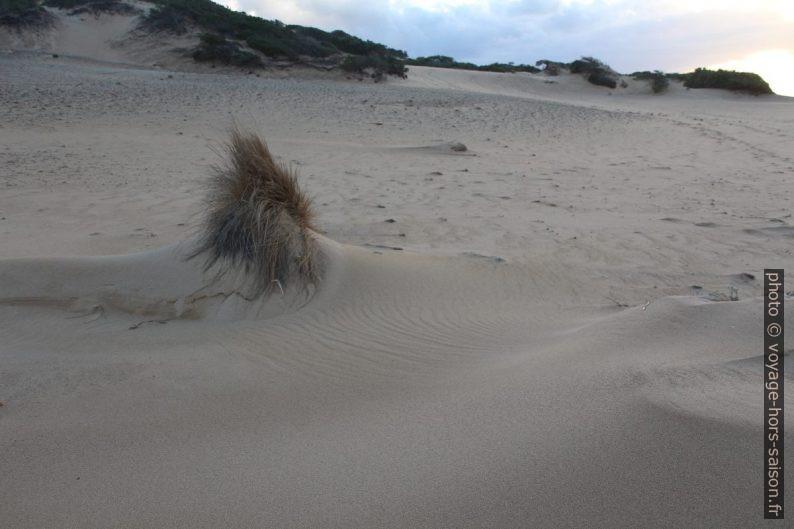 Végétation contre sable. Photo © André M. Winter