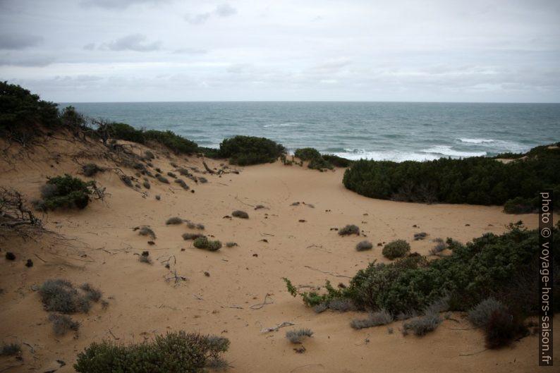 Végétation de la Dune di Piscinas. Photo © Alex Medwedeff