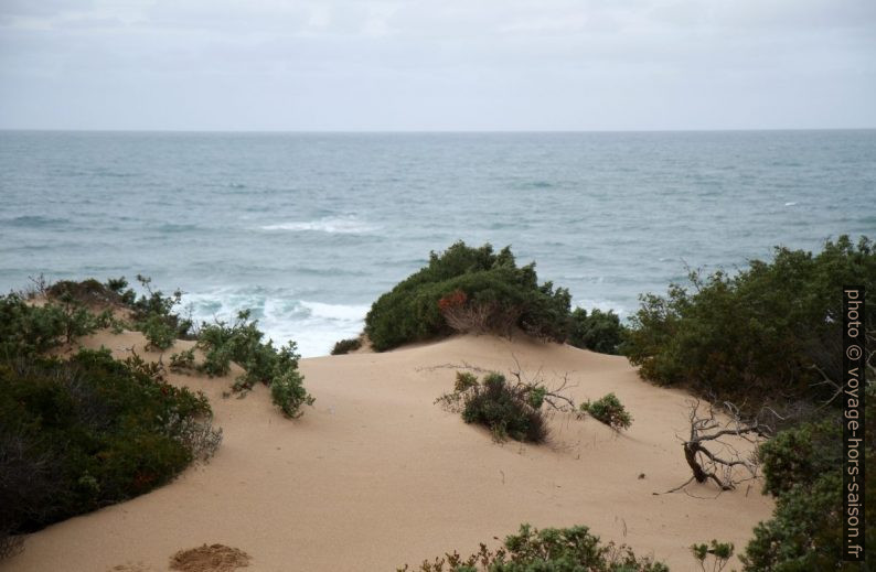 Végétation de la Dune di Piscinas avec la mer au fond. Photo © Alex Medwedeff