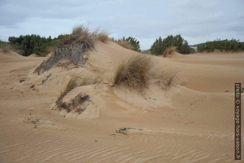 Dunes. Photo © Alex Medwedeff