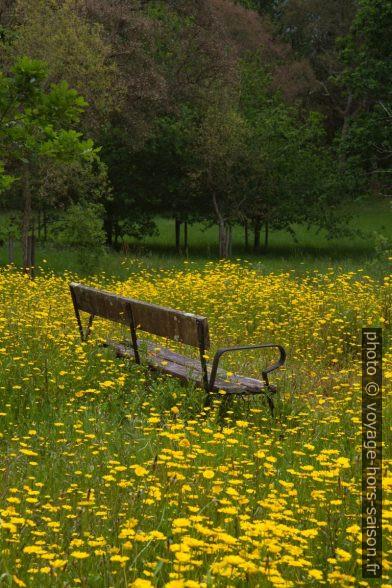 Un banc dans un pré en fleur. Photo © Alex Medwedeff