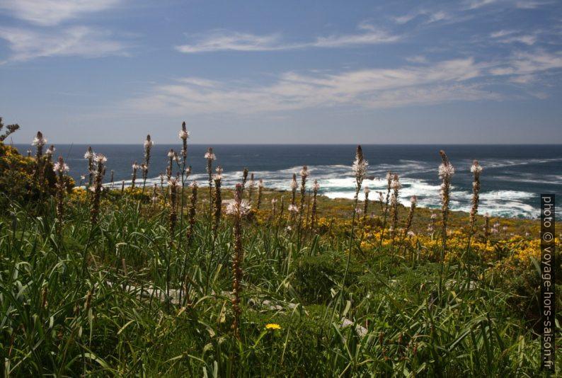 Fleurs printanières au Cap de Louro. Photo © Alex Medwedeff