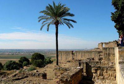 Palmier dans le fouilles de Madinat Al-Zahra. Photo © André M. Winter