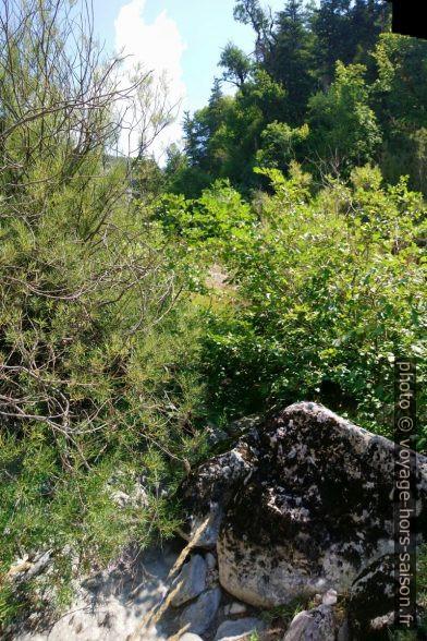 La végétation et rocher obstruent le passage. Photo © André M. Winter