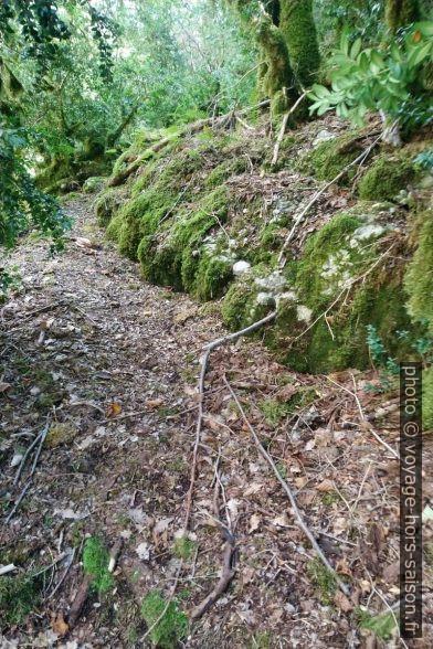 Un terrain plus facile sous la forêt haute. Photo © André M. Winter