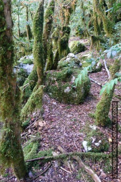 Les mousses couvrent les troncs des arbres. Photo © André M. Winter