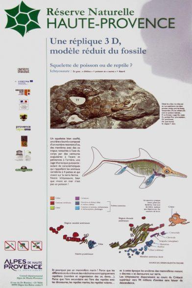 Panneau sur l'ichtysaure